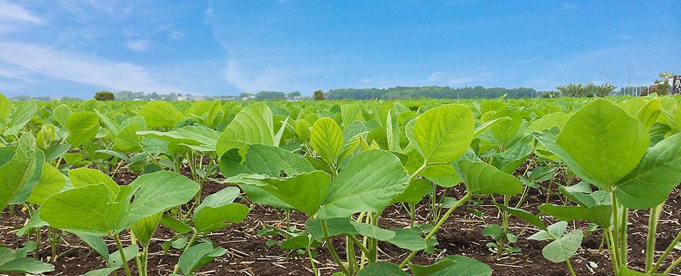 農薬も肥料も使わない農園 キッチンガーデン